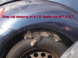 cat sleeping on VW Beetle